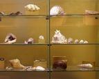 Nationale Kunst & Cultuur Cadeaukaart Delfzijl Muzeeaquarium Delfzijl